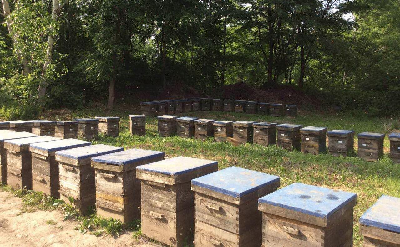 公司与白河林业局签订合作建立养蜂基地的合同